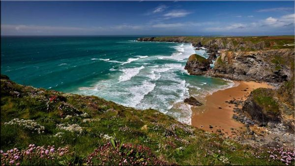 Wildflowers at Bedruthan Steps - Cornwall Canvas