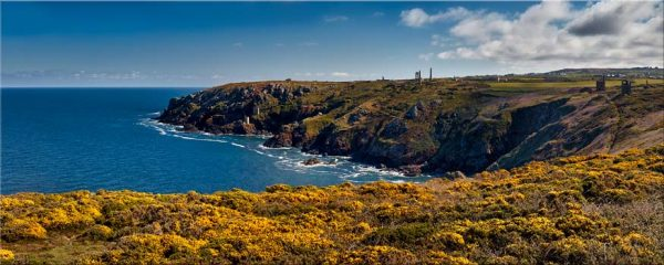 Botallack Mines Yellow Gorse - Canvas Print