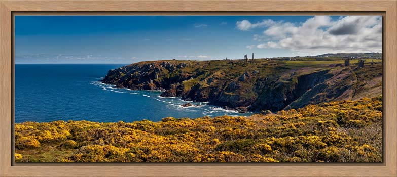 View over the coastal yellow Gorse to the mine ruins on the cliffs at Botallack