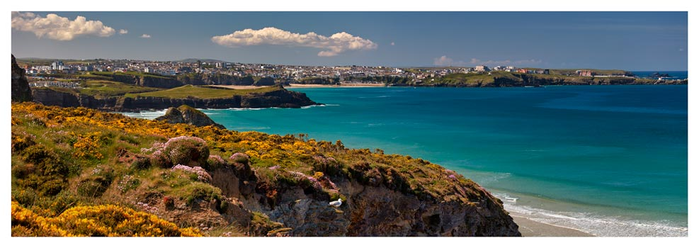 Wildflowers on Porth Cliffs - Prints of Cornwall